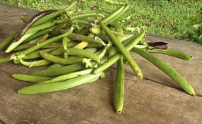 Voices of the vulnerable – Small-scale vanilla farmers