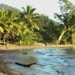Ocean Rainforest meet SM